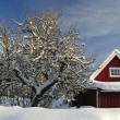 Swedish garden details in winter — Stock Photo