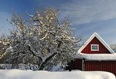 Swedish garden details in winter — Stock Photo