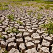 Global warming concept of cracked ground — Stock Photo