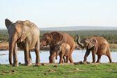 Elephants at Waterhole — Stock Photo