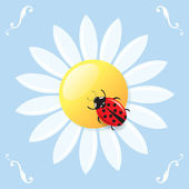 Ladybird on a daisy — Stock Vector