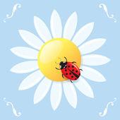 Ladybird on a daisy — Stock Vector
