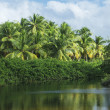 Clearing in a tropical jungle — Stock Photo
