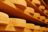 Mountain cheese — Stock Photo