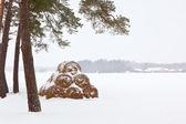 Winter Farm Landscape — Stock Photo