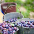 Three bucket of plums in a garden — Stock Photo