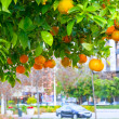 Stock Photo: Mandarin tree in city