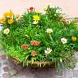 mångfärgade blomsterrabatt — Stockfoto