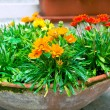 Multicolored flowerbed on a street — Stockfoto