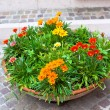 Foto Stock: Multicolored flowerbed on a street