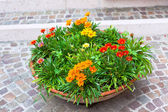 Multicolored flowerbed on a street — Stock Photo