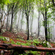 Early morning fog in the forest — Stockfoto