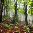 Early morning fog in the forest — Stock Photo #5043877