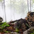 Early morning fog in the forest — Stock Photo #5043885