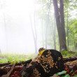 Early morning fog in the forest — Stock Photo #5043891