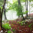 Early morning fog in the forest — Stock Photo #5043896