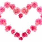 Single pink rose isolated — Stock Photo #5062751