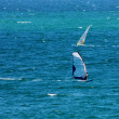 Royalty-Free Stock Photo: Windsurfing in Crimea