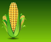 Corn illustration — Stock Photo