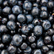 Bilberries whortleberries (Vaccínium myrtíllus) - Stock Photo