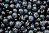 Bilberries whortleberries (Vaccínium myrtíllus) — Stock Photo