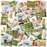 Dog collage — Stock Photo
