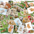 Stock Photo: Dog collage