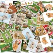 Dog collage — Stock Photo