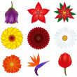 Collection of popular and exotic flowers - vector illustration. — Stock Vector