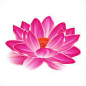 Water lily flower, isolated element to your spa design. — Stock Vector