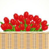 Vector illustration of red tulips. Gradient meshes. — Stock Vector