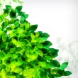 Vector fresh spring foliage background. Abstract background of f — Image vectorielle