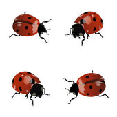 Ladybugs — Stock Vector