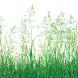 Stock Photo: Abstract Meadow Grass Background Isolated