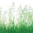 Abstract Meadow Grass Background Isolated - Stock Photo