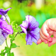 A little child`s hand touching a flower — Foto Stock