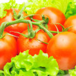 Branch of tomatoes over fresh salad leaves — Stock Photo
