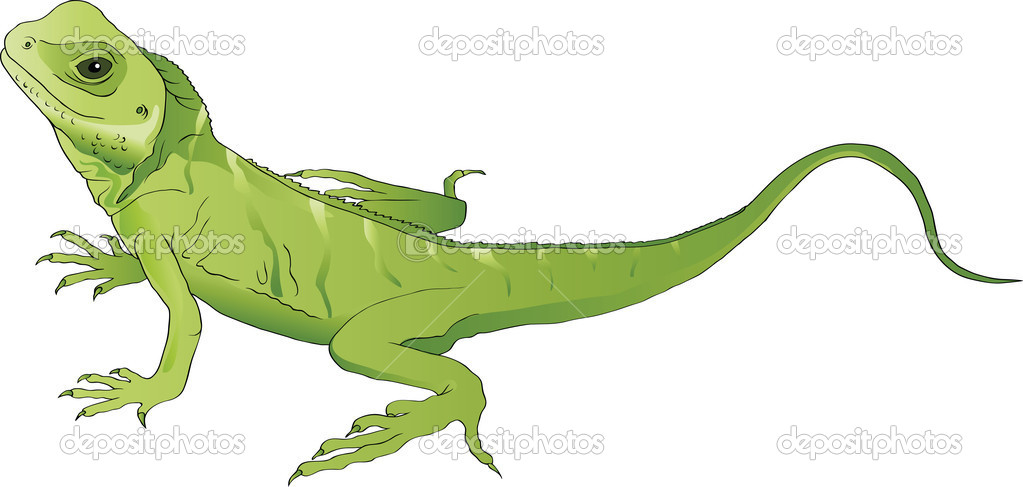 Green lizard  Stock Vector #4645646