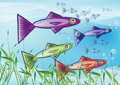 Cardumen de peces — Foto de Stock