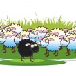 Black Sheep - Stock Photo
