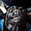 Expressive dog — Stock Photo