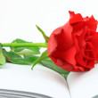 Royalty-Free Stock Photo: Red rose on a book