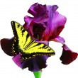 Foto Stock: Butterfly and Iris