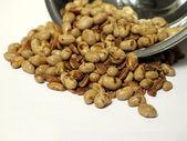 Soya-bean — Stock Photo
