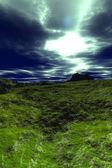 Zielonej pustyni — Zdjęcie stockowe