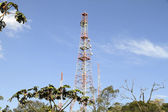 Antenna in the Jungle — Stock Photo