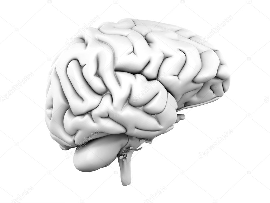 A human brain. Medical. 3D rendered Illustration. — Stock Photo #5042026