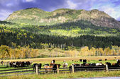 Field of cows in fall — Stock Photo