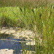 Stock Photo: FloridSwamp Pond