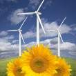 Stock Photo: Wind Turbines Against Dramatic Sky with Bright Sunflowers